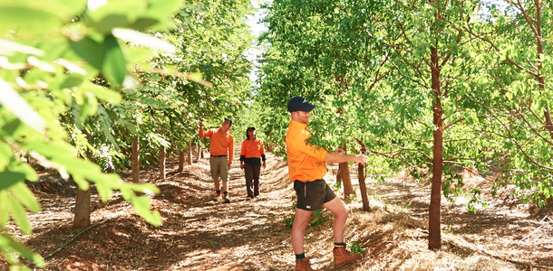 Money Growing on TFS' Trees – ShareCafe